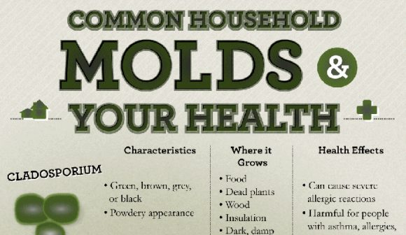 Common Black Mold Problems, Black Mold